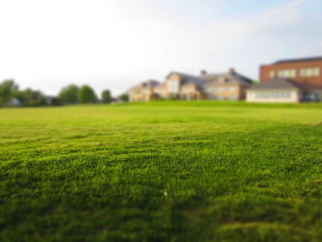 Trawa z rolki – podstawowe informacje